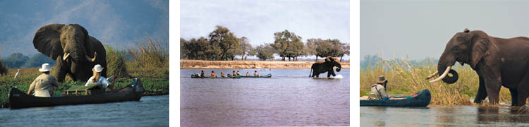 TP - Canoeing in Mana Pools
